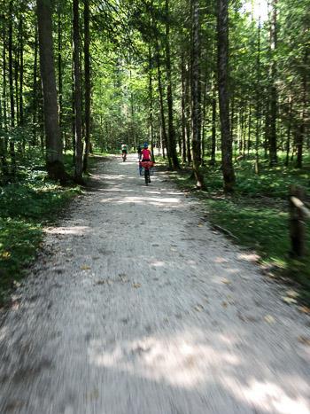 Petit chemin en sous-bois