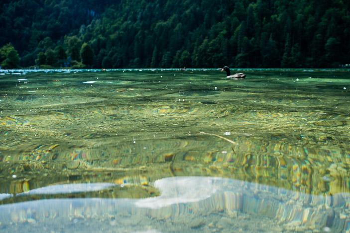 Pique-nique les pieds dans l'eau, en regardant les canards