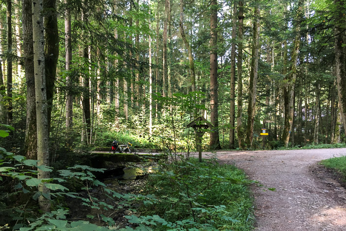 Joli passage en forêt