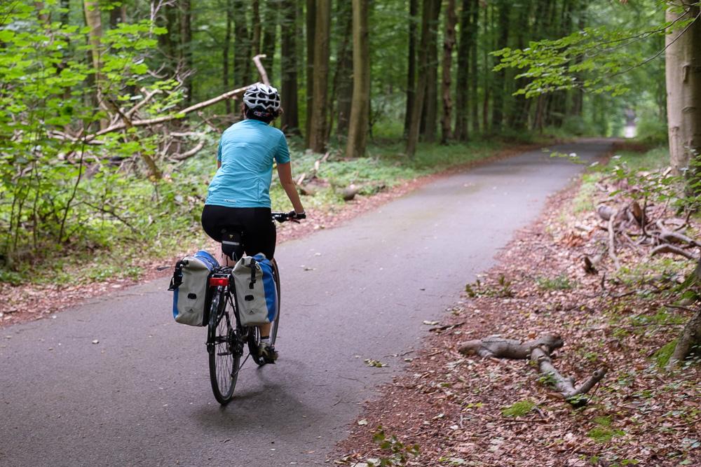 Vélo en forêt de Soignes